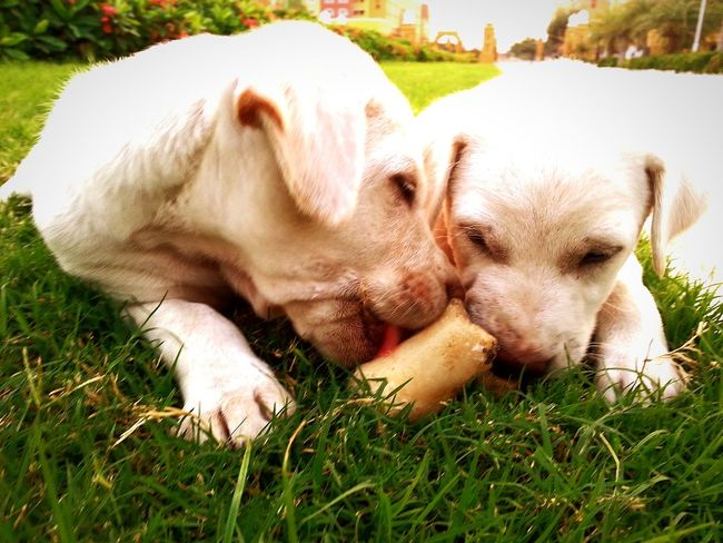 Cute puppies Puppy Love Puppy Playtime Puppy Power Caught In The Moment Caught In The Act Cute Pets Check This Out
