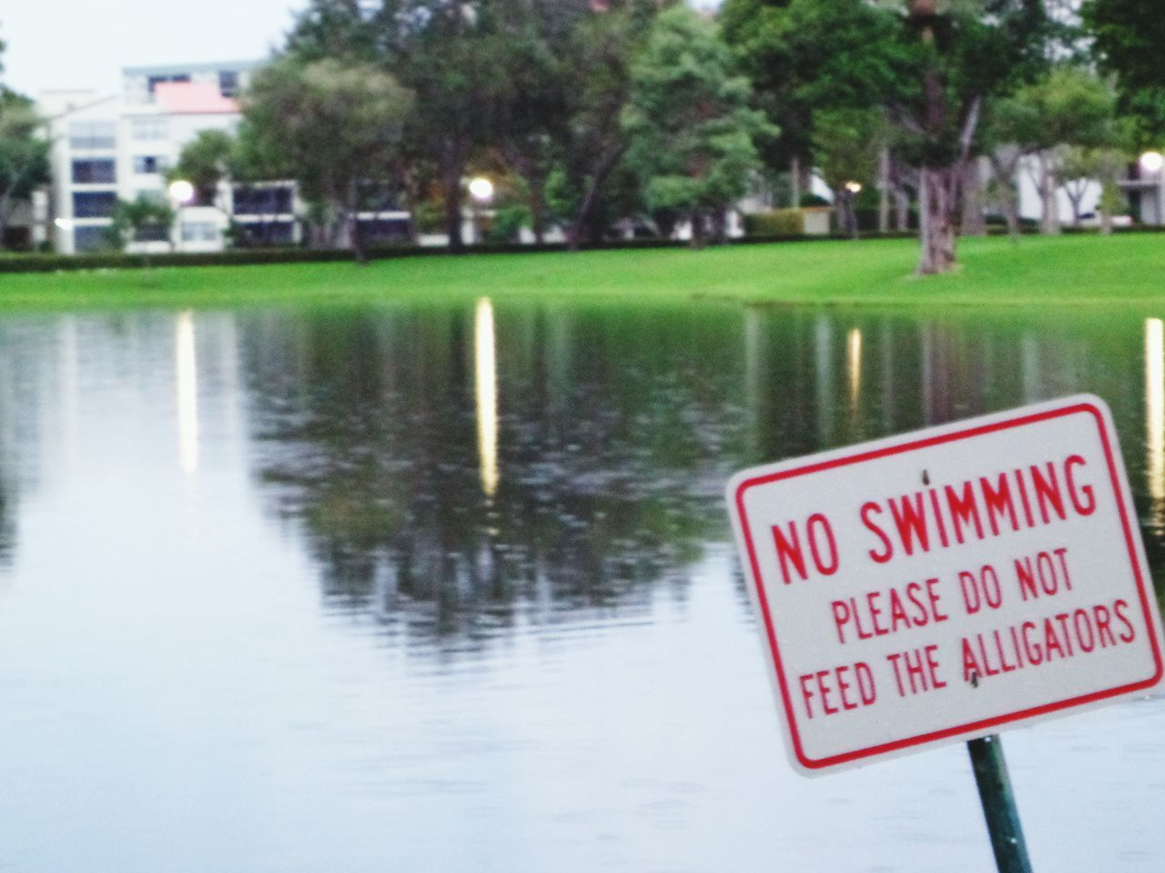 No swiming, do not feed the alligators sign in a neighborhood in south Florida. Text Communication Water Safety Information Sign Waterfront Signboard Outdoors Day Focus On Foreground Red USA Floida Travel Alligator Swimming Lake Funny Pompano Beach Danger Neighborhood Rain