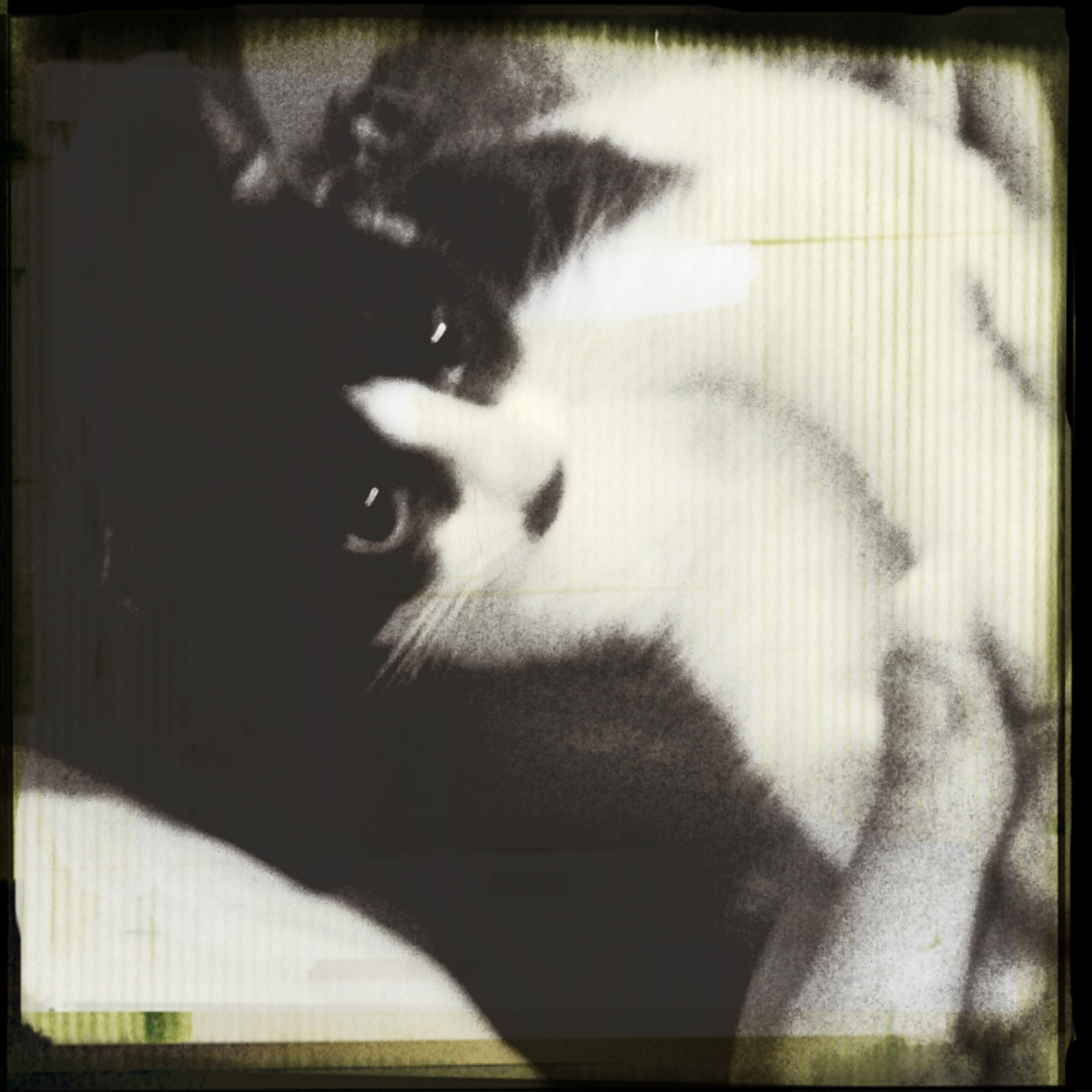 Cute Pets cat First Eyeem Photo