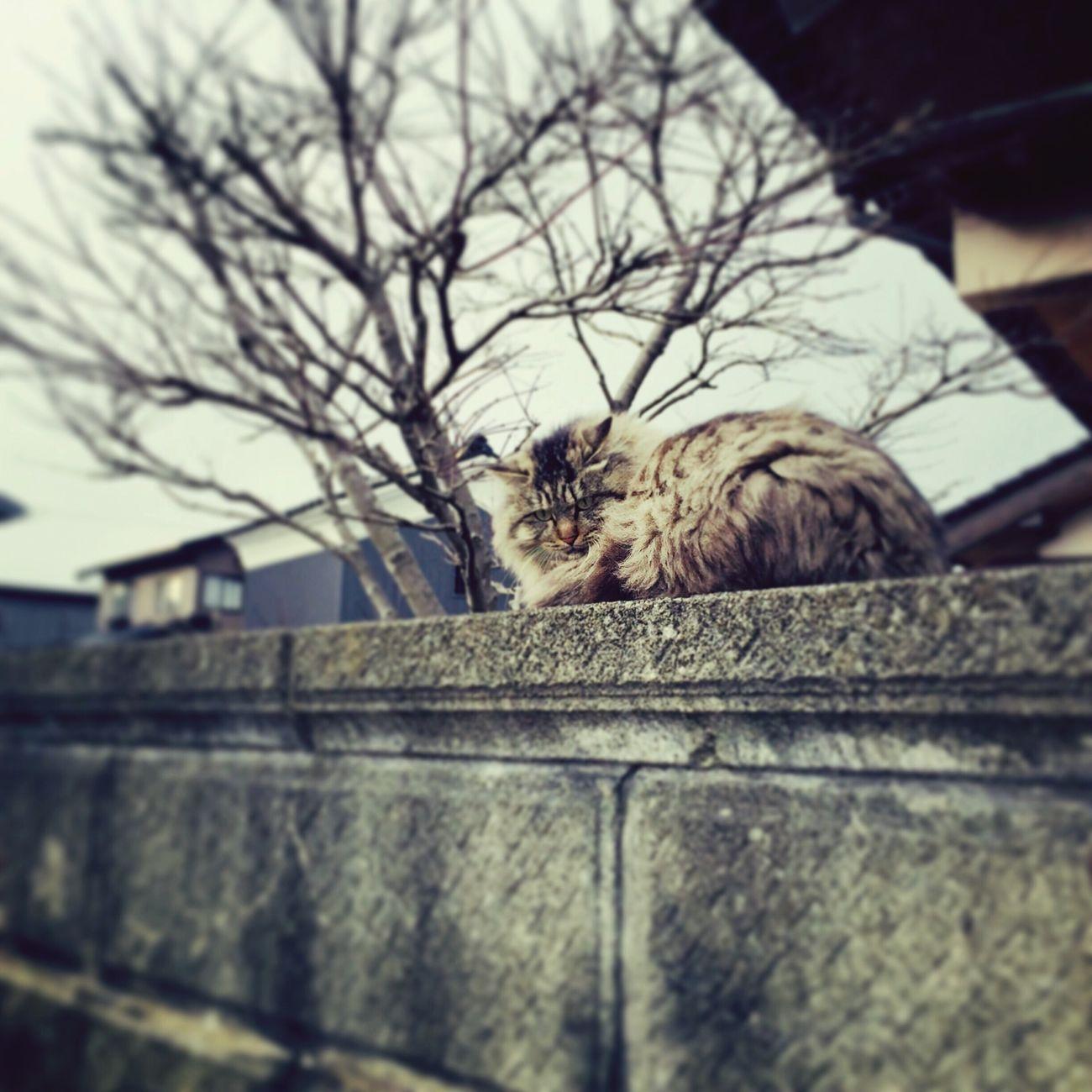 Cat Streetphotography