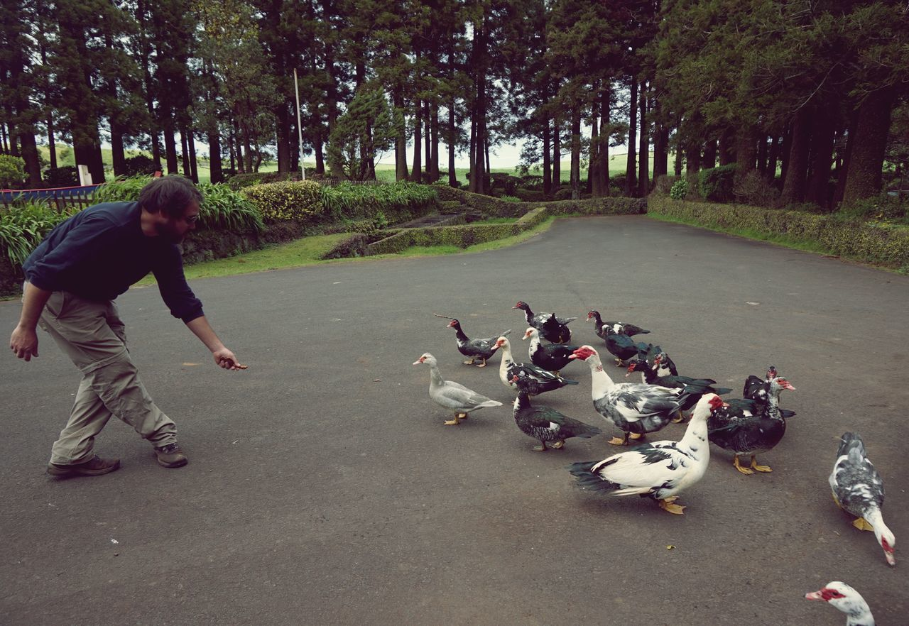 Açores Casual Clothing Day Ducks Enjoyment EyeEm Best Edits EyeEm Best Shots Feeding Animals Followme Fun Grass Leisure Activity Mixed Age Range Music My Favorite Photo Natural Park Nature Outdoors Park Patos Showing Imperfection São Jorge Tree