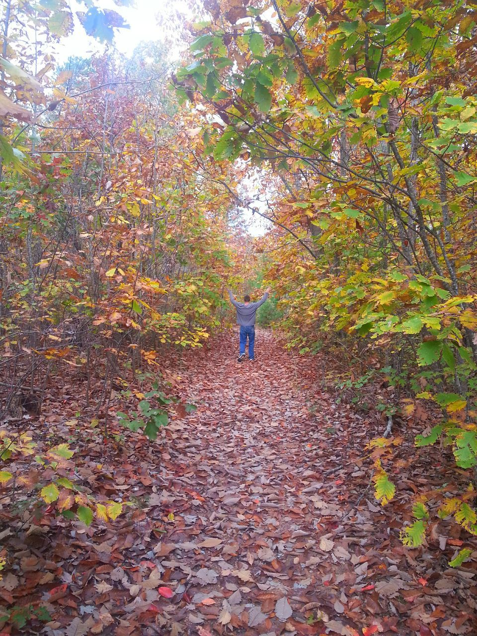 autumn, leaf, change, nature, tree, leaves, beauty in nature, day, full length, fallen, one person, outdoors, branch, tranquility, real people, scenics, forest, growth, maple, energetic, people