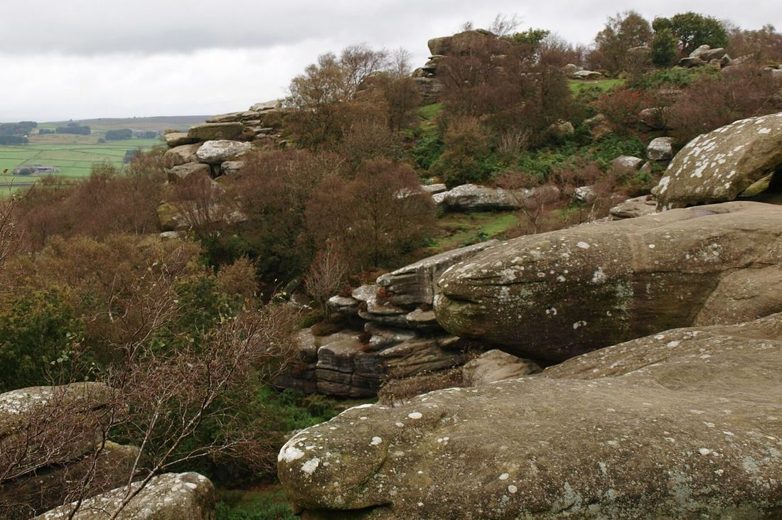Landscape Rocks Rock Formation Tree Fields Moors Woods Forest Hills Scenics Outdoors Autumn Brimham Rocks Yorkshire