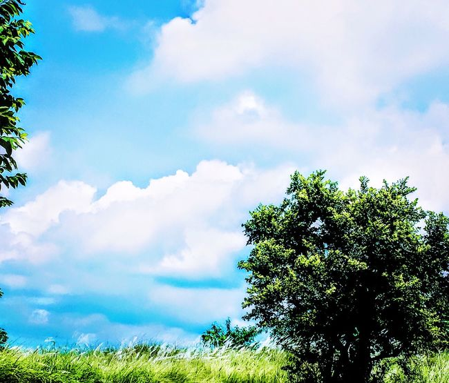 Nephophilia. Love of clouds 💙 Eyeem Philippines EyeEm Nature Lover TravelPhilippines Tree Sky Cloud - Sky Tranquil Scene Cloud Low Angle View Tranquility Scenics Beauty In Nature Nature Landscape Green Blue Growth Green Color Day Non-urban Scene Cloudscape Majestic Outdoors