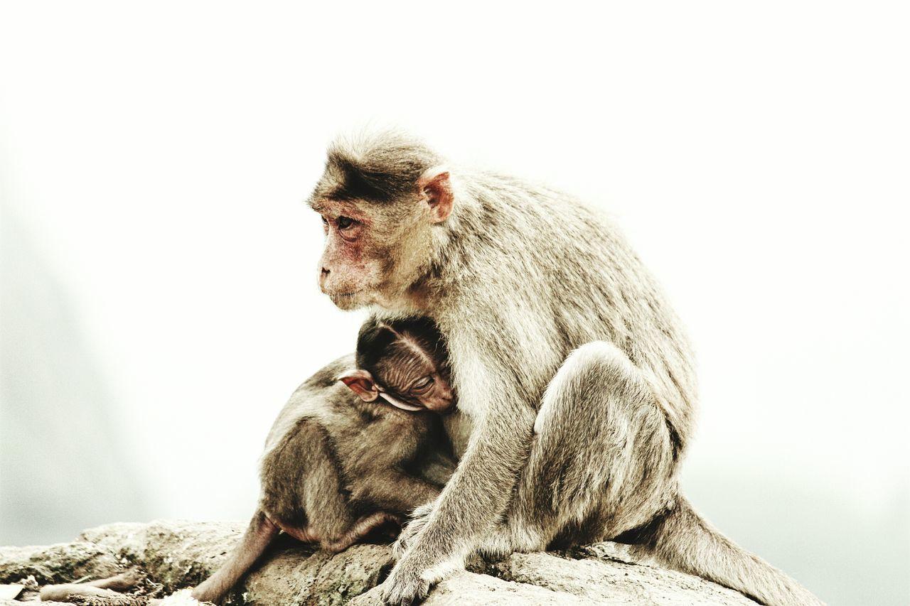 Beautiful stock photos of maternity, Animal Family, Animal Themes, Care, Day