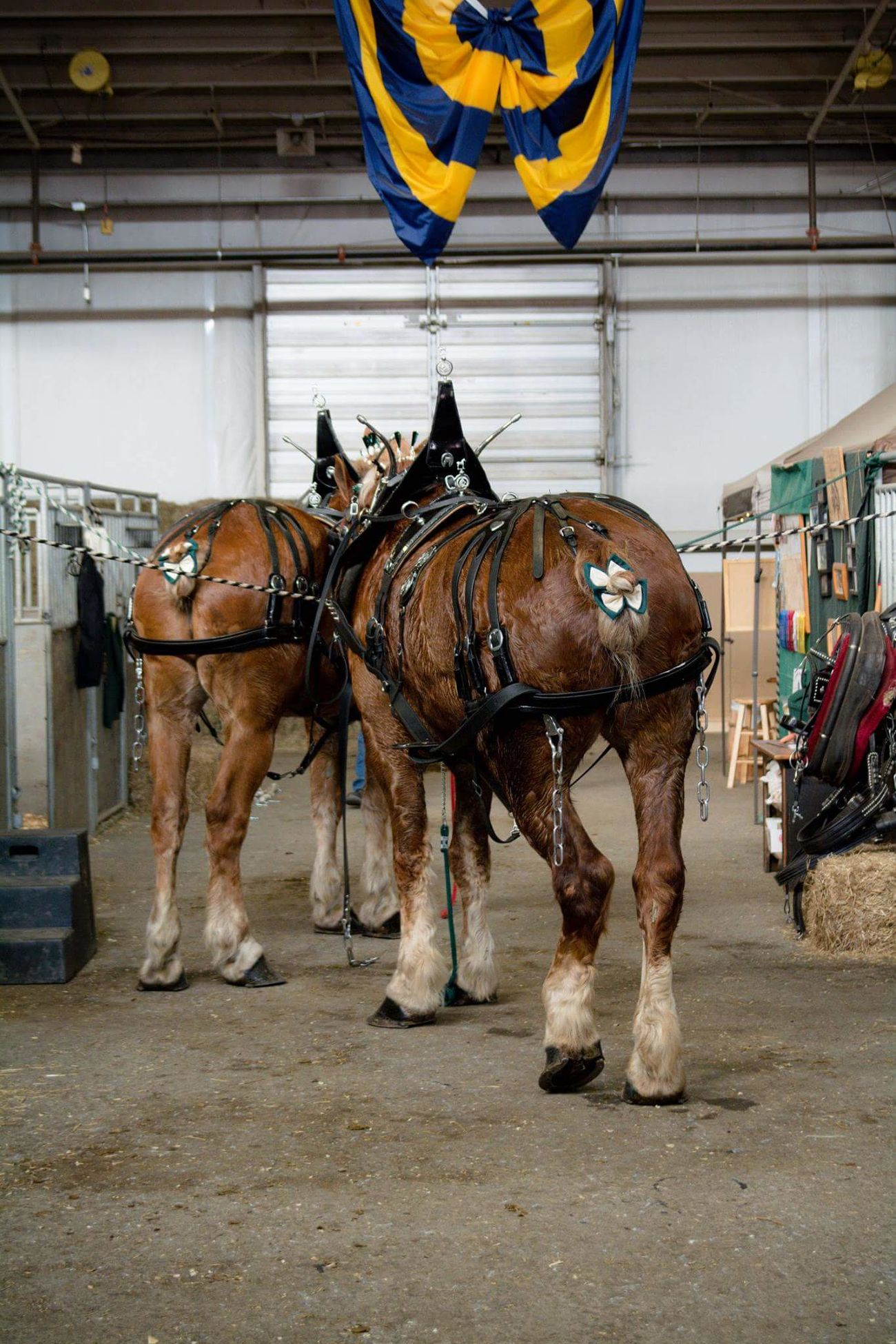 The business end. Horse Showhorse Farm Show Pennsylvania