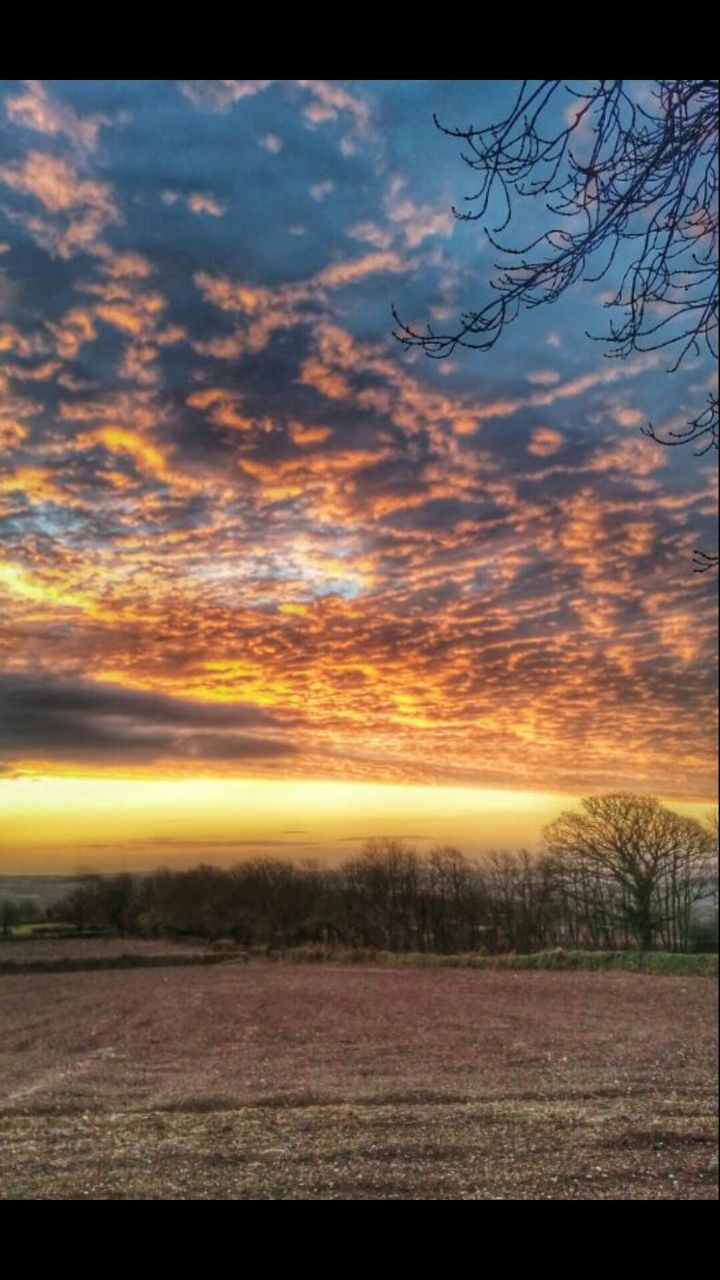 sunset, scenics, tranquil scene, tranquility, nature, beauty in nature, sky, no people, outdoors, landscape, cloud - sky, tree, day