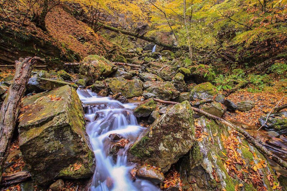 那須の紅葉です。 Tree Flowing Water No People Hot Spring Village It's Beautiful Close-up Autumn Leaves 秋 温泉郷 Water Japan 名所 Points Of Interest 紅葉 水辺 日本 Travel