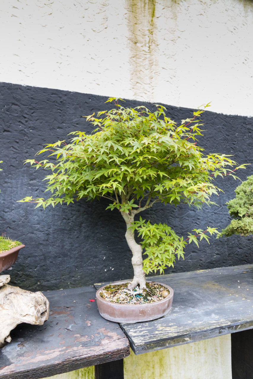 growth, plant, no people, potted plant, leaf, day, outdoors, nature, freshness, close-up