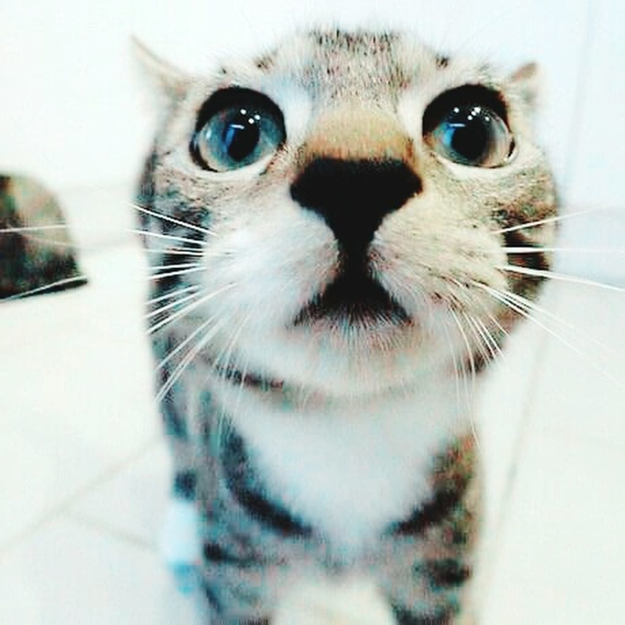My new daughter. She has sexyeyes same as me.😂 Daughter My Daughter ♥ Cat Cat Lovers Cat Eyes Cat Watching So Cute :) Cats Of EyeEm First Eyeem Photo Eyeem Nice Shots