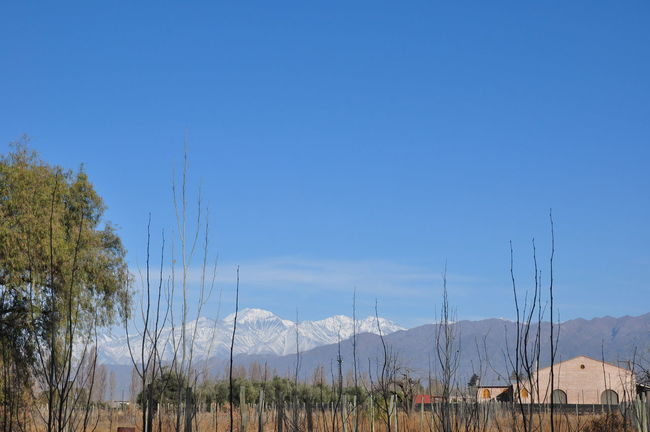 Blue Clear Sky Field Landscape Mountain Nature Non-urban Scene Outdoors Plant Sky Mendoza Vineyard Malbec Malbec Argentino Wine Wine Tasting