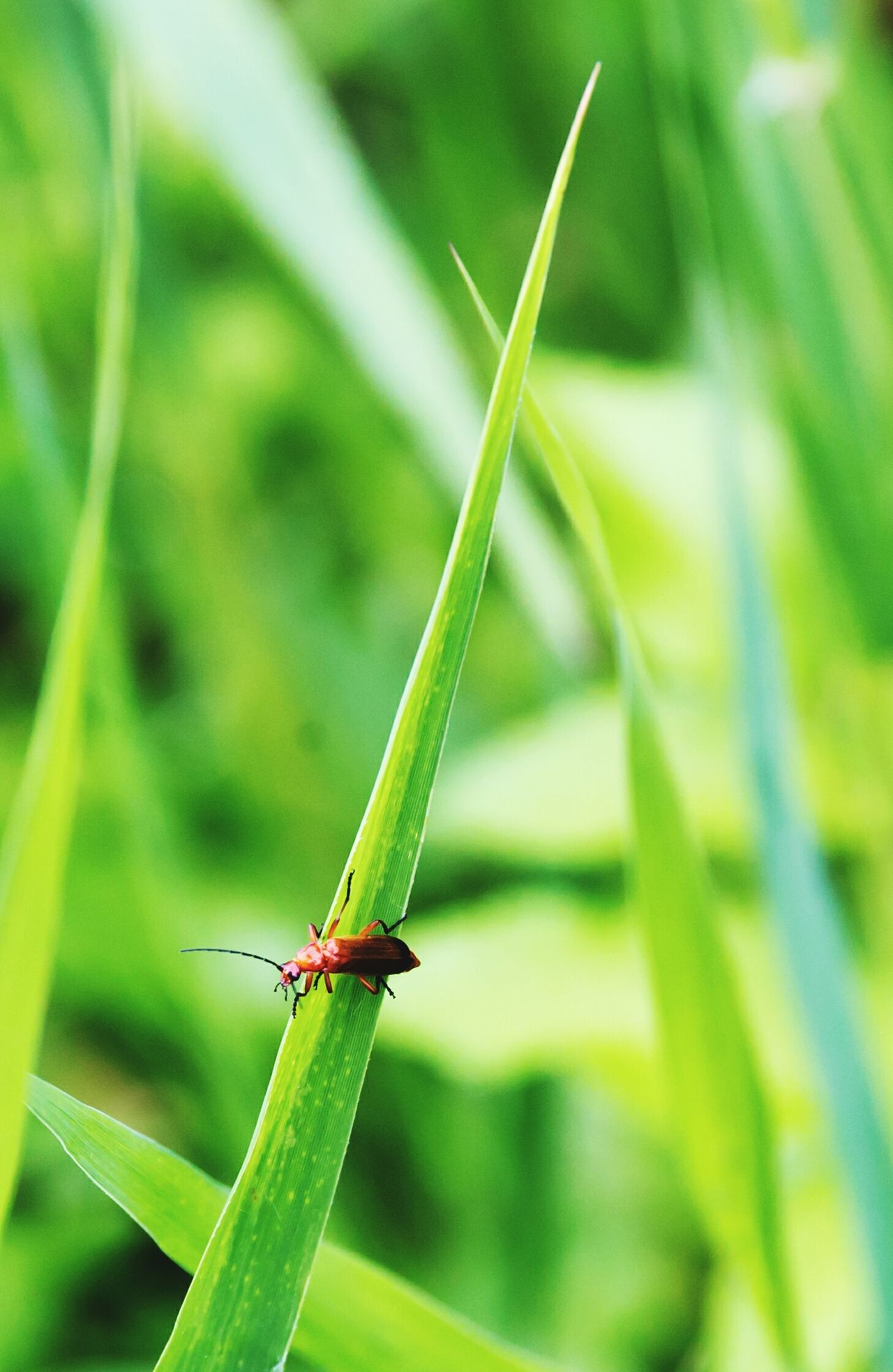 Insect Green Color One Animal Animals In The Wild Animal Wildlife Animal Themes Close-up Outdoors Nature Day Focus On Foreground No People Leaf Damselfly Plant