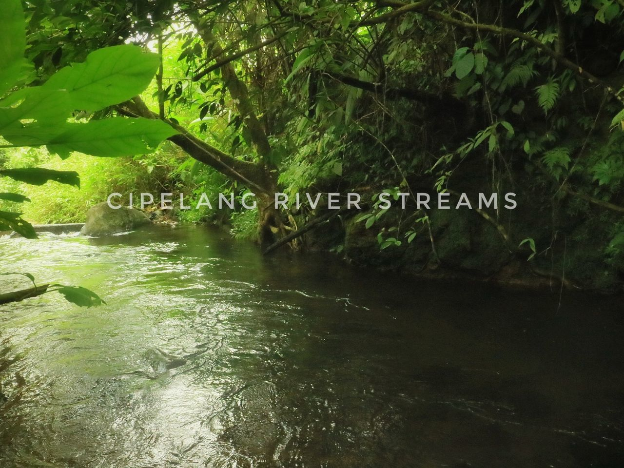 Streams And Rivers Sukabumi Sundaymorning Photoofthedy Nature_perfection Naturelovers River Ig_naturesbest Bns_nature Bns_world Rsa_ladies Bestplaces Green Nature Natgeo_lovers