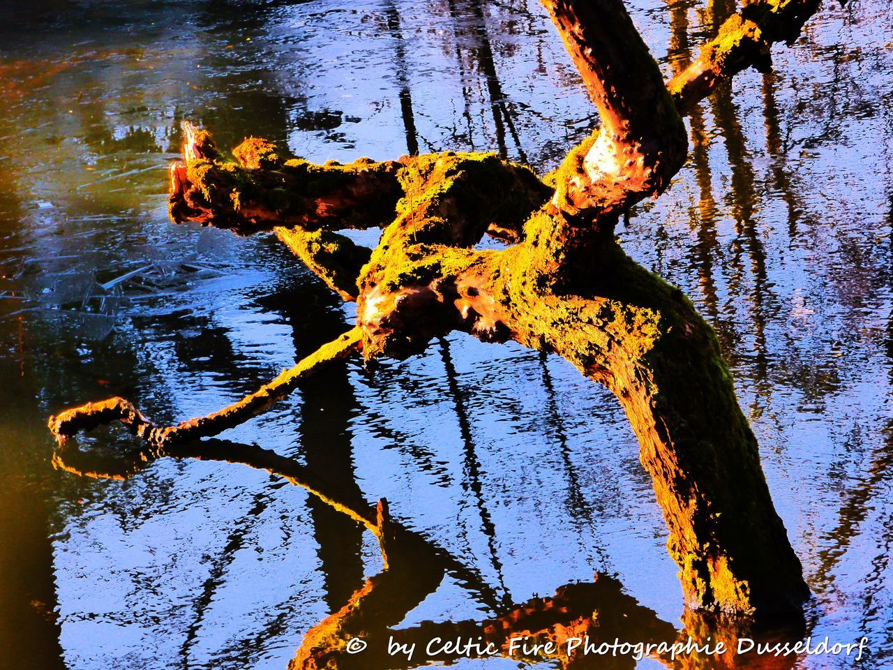 tree, no people, water, day, nature, outdoors, lake, branch, close-up, beauty in nature