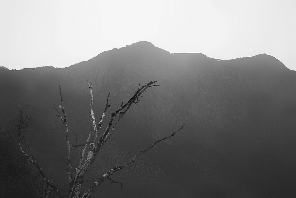 China Photos 백두산 Landscape Landscape_Collection Tree TreePorn Hugging A Tree Treepark Silhouette Korean Historical Place Historic Site Taking Photos Bnw Bnw_life Black And White Blackandwhite Travel Streamzoofamily Monochrome Photography