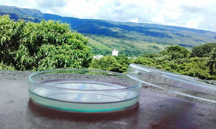 Agar bacteriologico Microbiology Green Narure Love ♥ Putumayo  Mocoa PTYO 👏 Mocoa