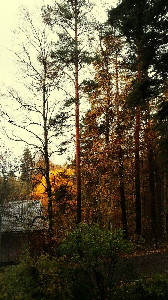 At Home Autumn
