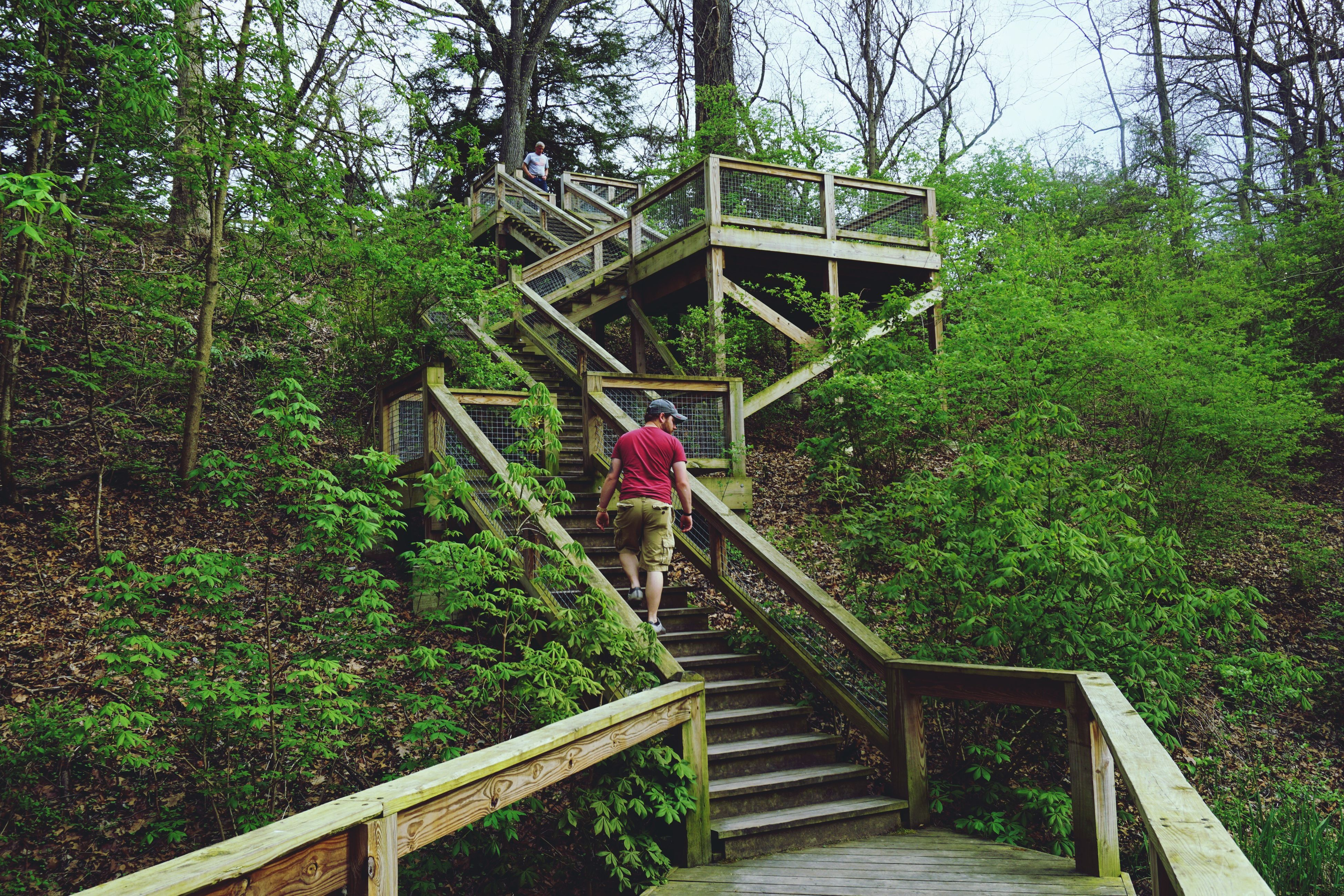 railing, tree, steps, built structure, growth, plant, staircase, steps and staircases, architecture, wood - material, flower, nature, stairs, footbridge, green color, day, the way forward, outdoors, sunlight, wooden