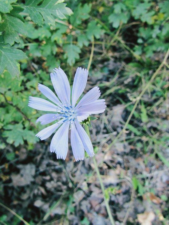 Walking Around Flower Nature