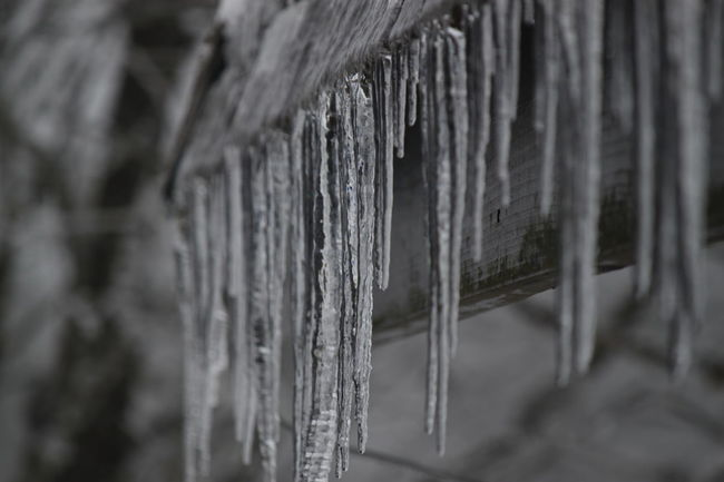 Close-up Cold Frozen Icicles Nature No People Outdoors Water Wood - Material