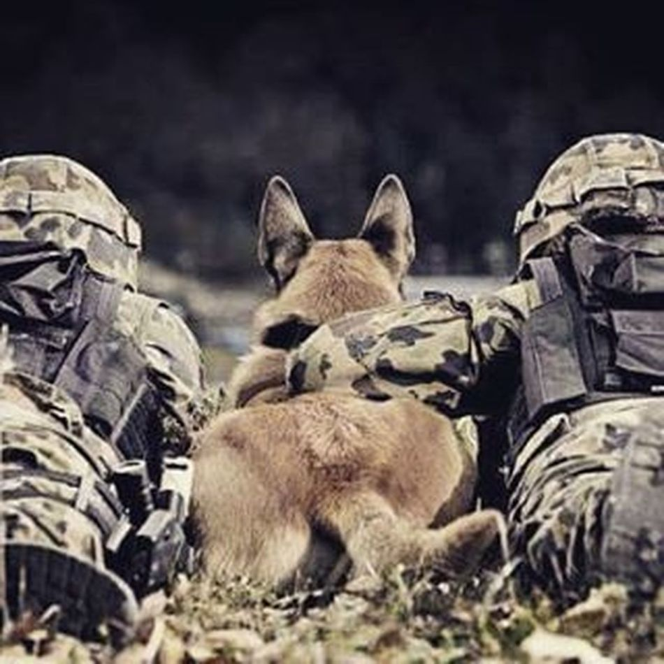 Always there when you need them, dogs are the best! ❤️💗 Respect Besthumanfriend Dogsofinstagram Instalike Bestpic Instapic Germanshepherd Army