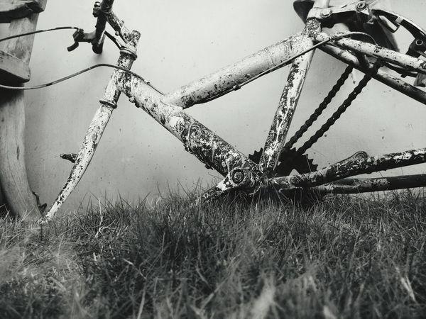 Backyard Blackandwhite Photography Bike