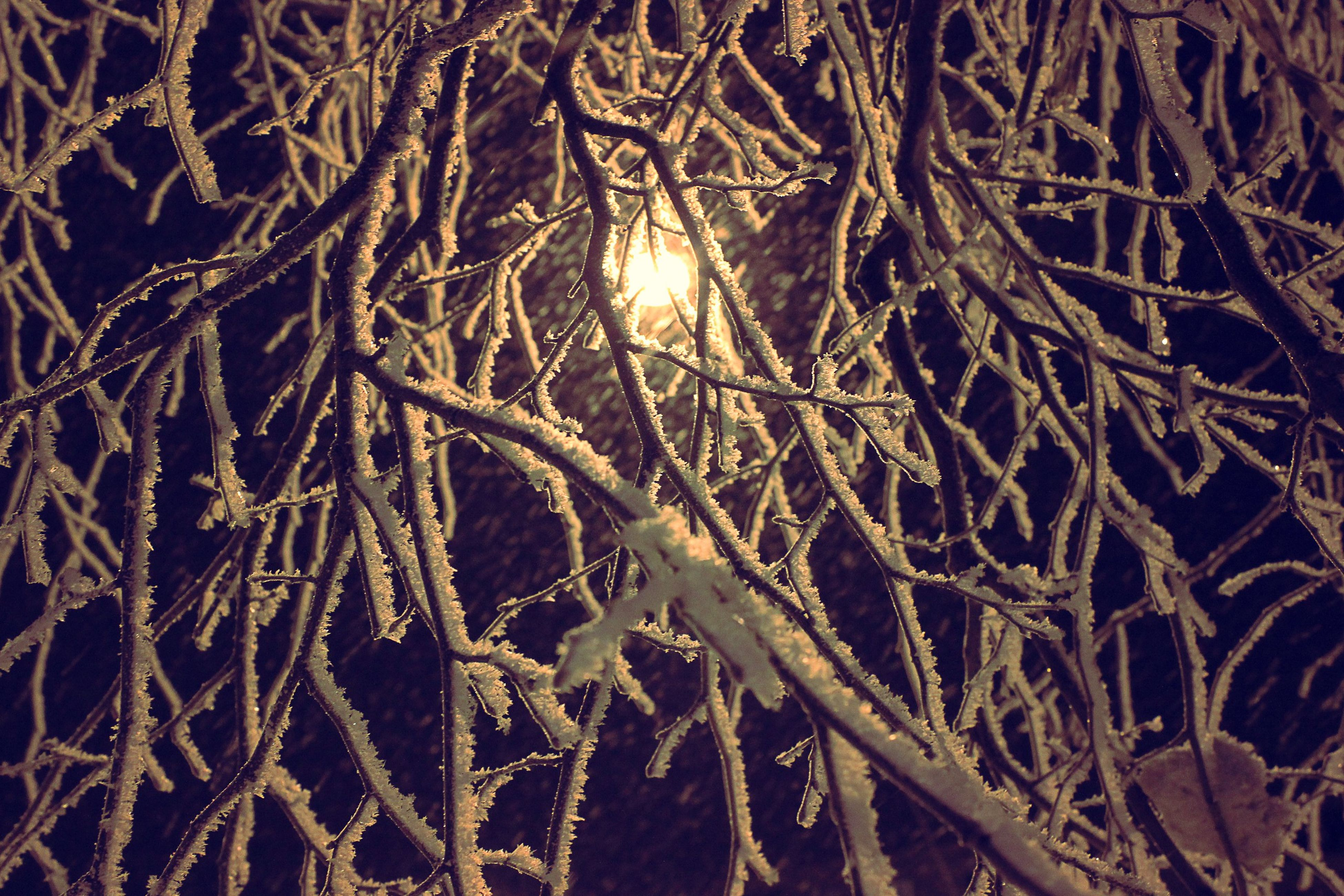 branch, bare tree, night, tree, low angle view, tranquility, nature, full frame, backgrounds, beauty in nature, winter, silhouette, outdoors, growth, no people, cold temperature, scenics, illuminated, sky, close-up