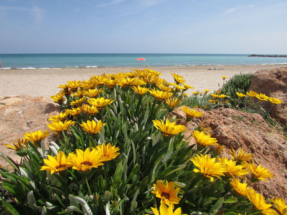 No People Flower Horizon Over Water Beach