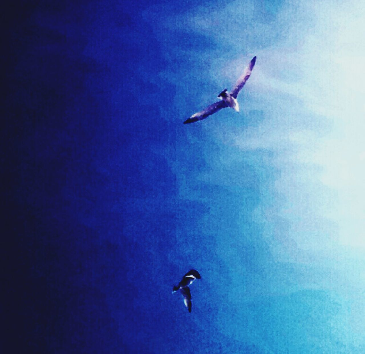 flying, mid-air, bird, full length, day, sky, outdoors, animal themes, motion, animals in the wild, blue, low angle view, spread wings, nature, one person, water, energetic, people