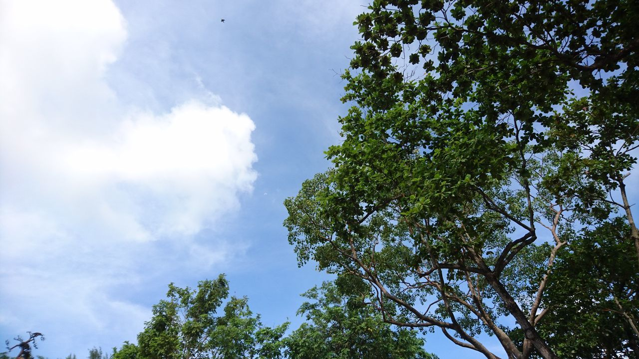 Singapore Hawparvilla Randomshot Bright Day Trees Cloudy