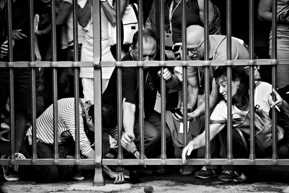 Saving hedgehog Ryan. Animal In Distress Behind The Bars Black And White Candid Candid Photography Candid Portraits Candid Shots City Life Hedgehog Helping Out Helping People Large Group Of People Lifestyles Monochrome Photography Outdoors Reaching Out Rome Street Street Life Street Photography Tourism Tourists