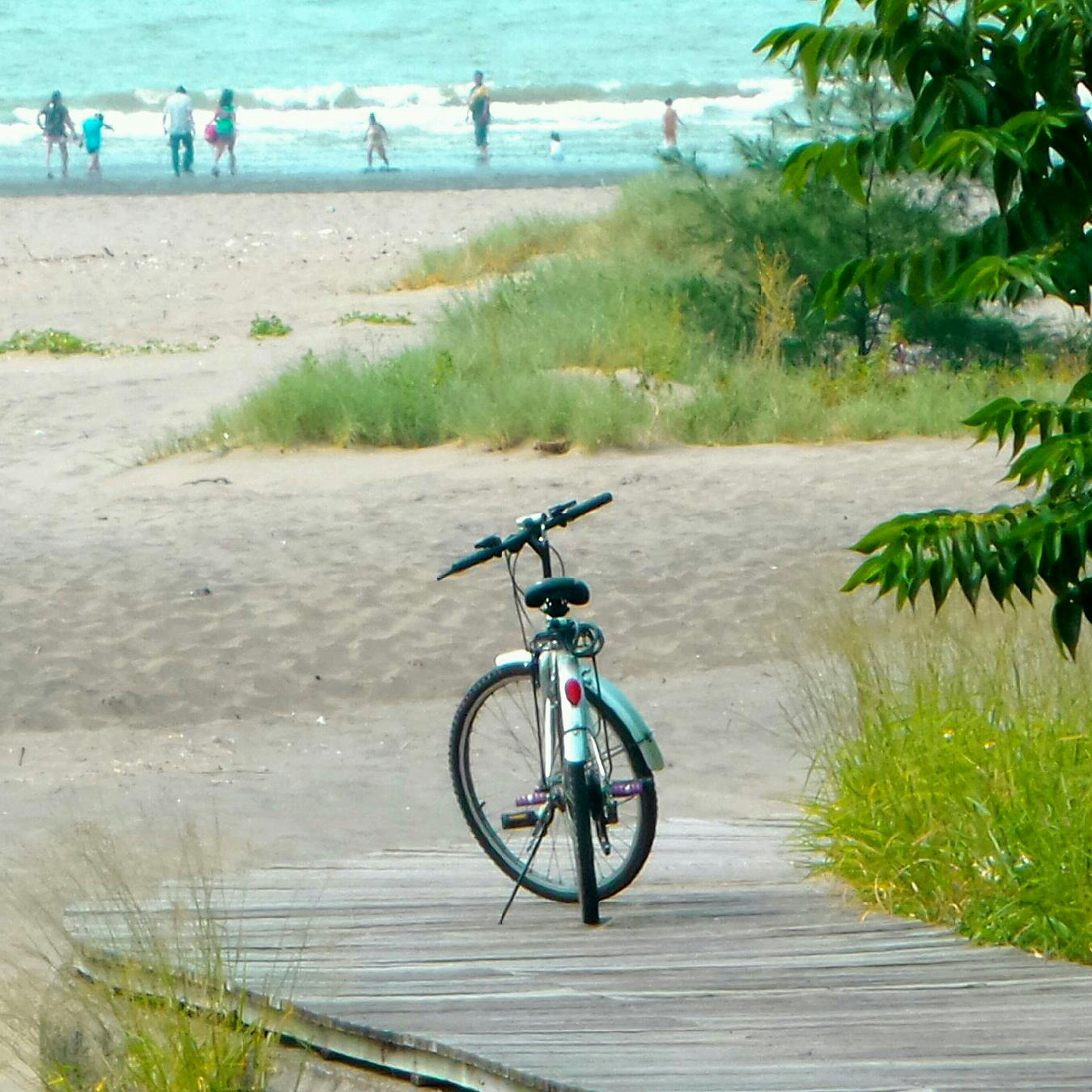 bicycle, beach, sand, transportation, mode of transport, water, sea, leisure activity, tree, lifestyles, vacations, tranquility, men, grass, land vehicle, shore, nature, travel, day