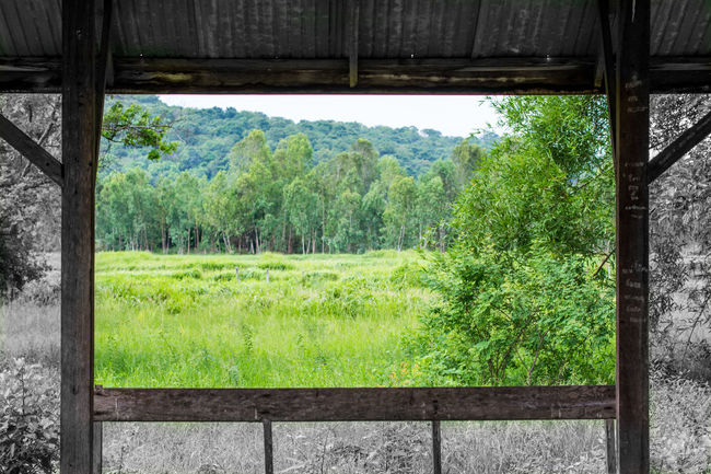 Beauty In Nature Day Desaturated Grass Green Green Color Growing Growth Landscape Lush Foliage Nature No People Non-urban Scene Rural Scene Sala Scenics Tranquil Scene Tranquility Tree Window Window To The World