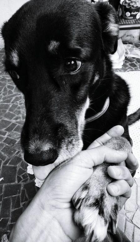 Dog Dog Lover Dogs Care Love Friendship Companion Dog Dogs Of EyeEm Pets Pet Pet Photography  Petslove