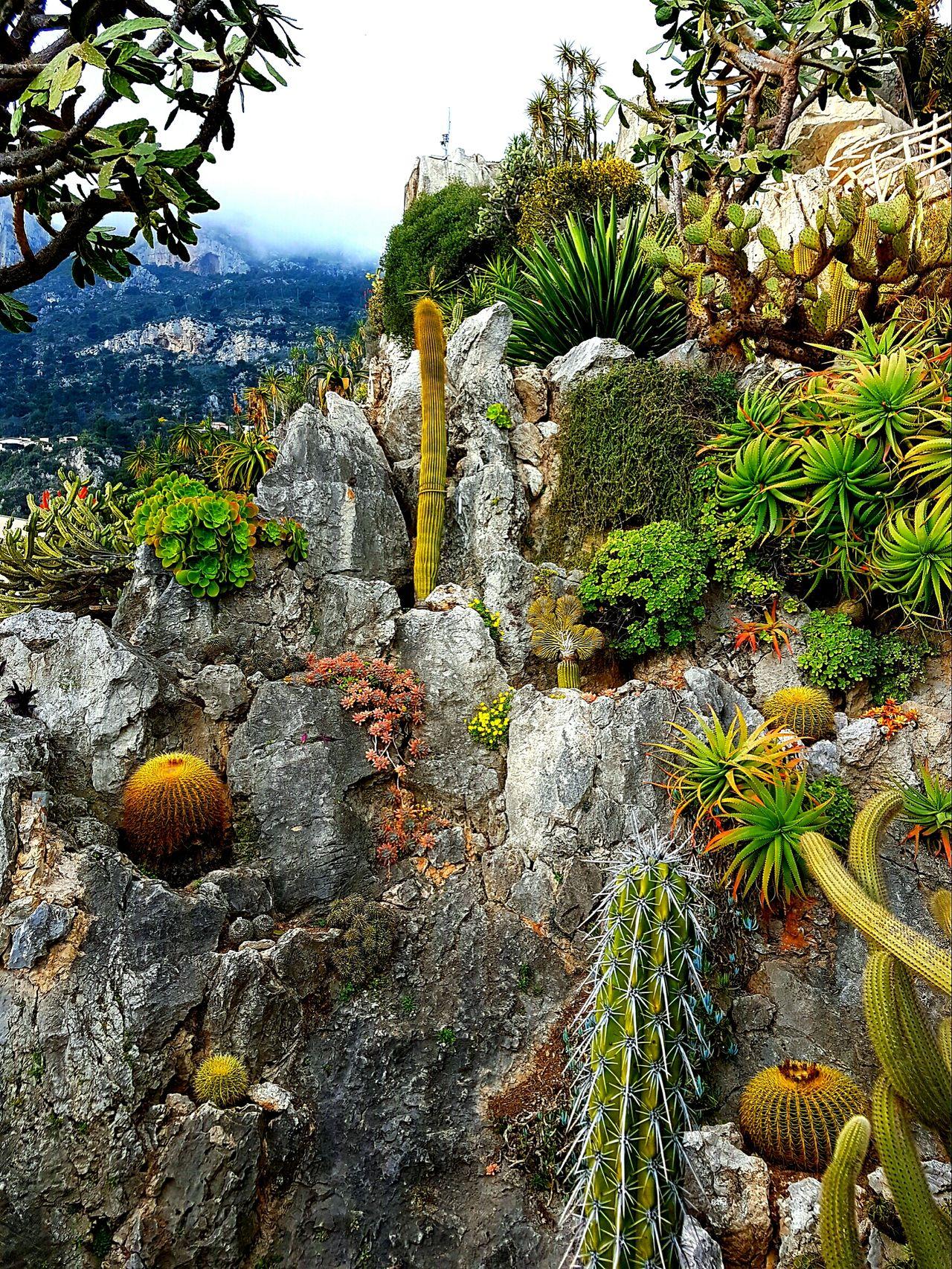 Monaco Beauty In Nature Plant Outdoors Cactus Cactus Garden Cactus Paradise Cactusplants