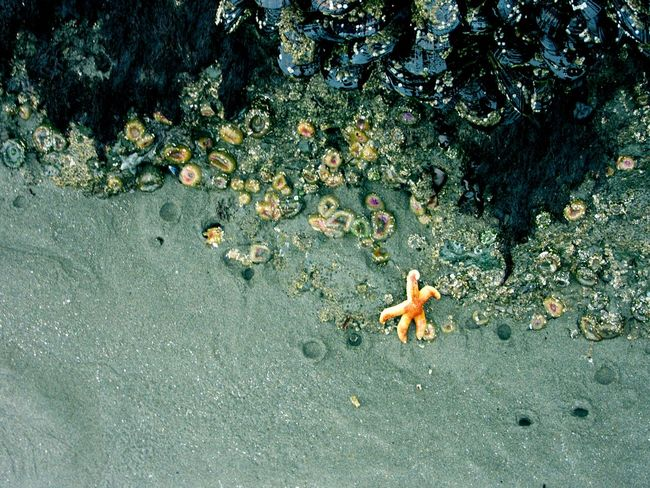 Low Tide Starfish  Soaking Up The Sun Beach Photography Ocean Beautiful Beach Nature Check This Out Being A Beach Bum