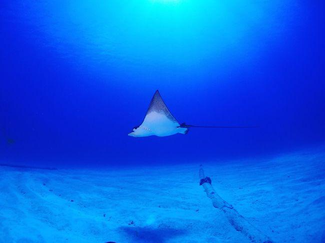 Colour Of Life Blue Ray Eagleray Sea