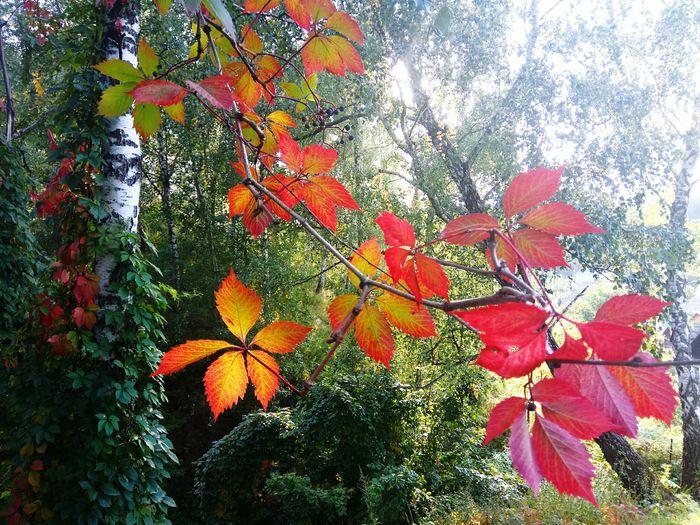 Дыхание осени... Nature Flower