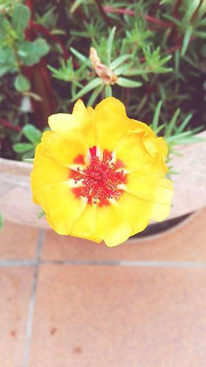 Flor groga (Manel) Naturelight Flowers Flowerporn Flower Collection Flower Photography Nature Photography Beauty In Nature Beautiful Nature Flors/ Flowers Flores Y Más Flores Colours Of Nature Nature Perfect