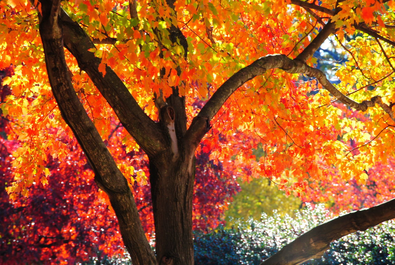 Low Angle View Of Autumn Tree In Park