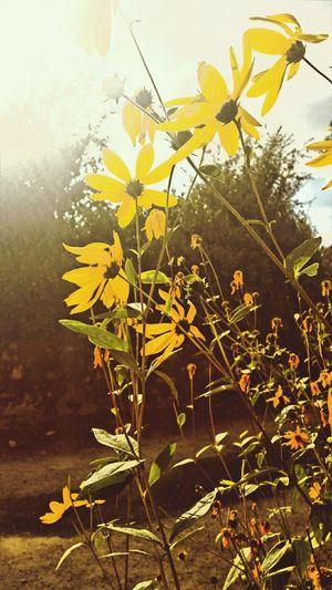 Soleil , chaleur , fleurs
