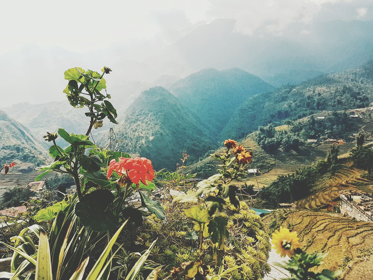 Moutain Nature Flower Beauty In Nature Landscape Freshness Photos Around You Quiet Time Moutain View Vacations Live, Love, Laugh