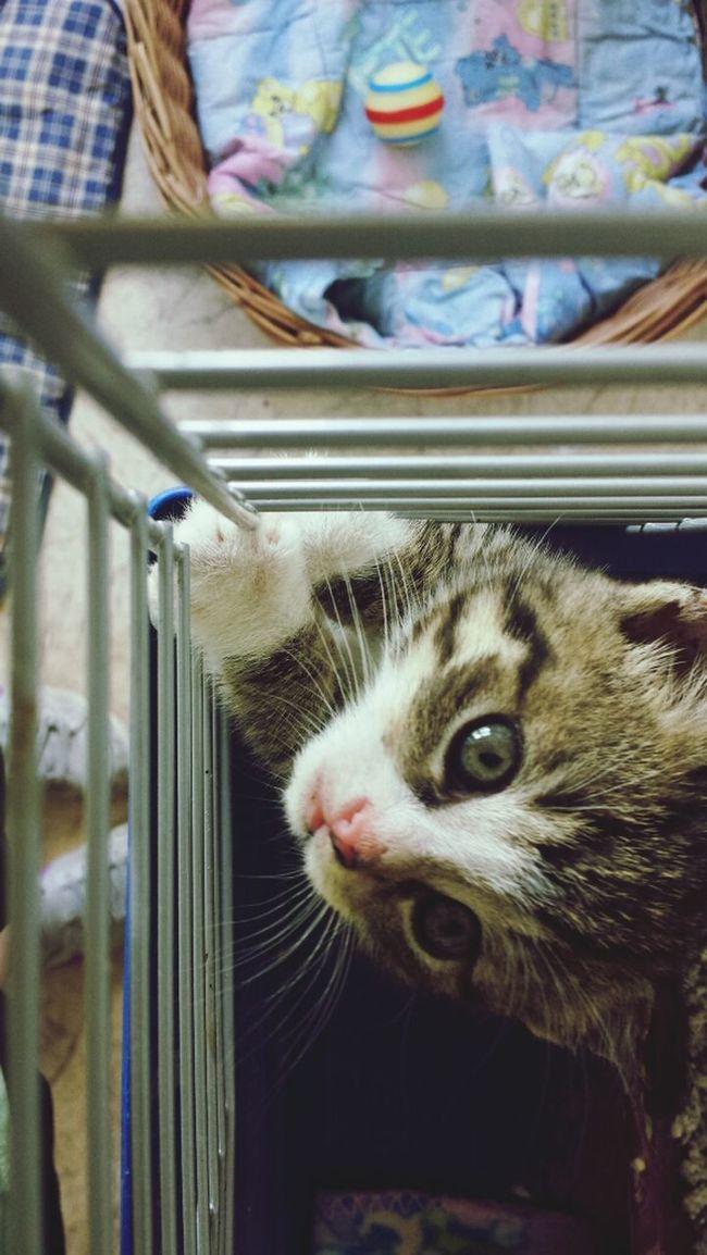 Tierheimamsee Babycat Animal Cute