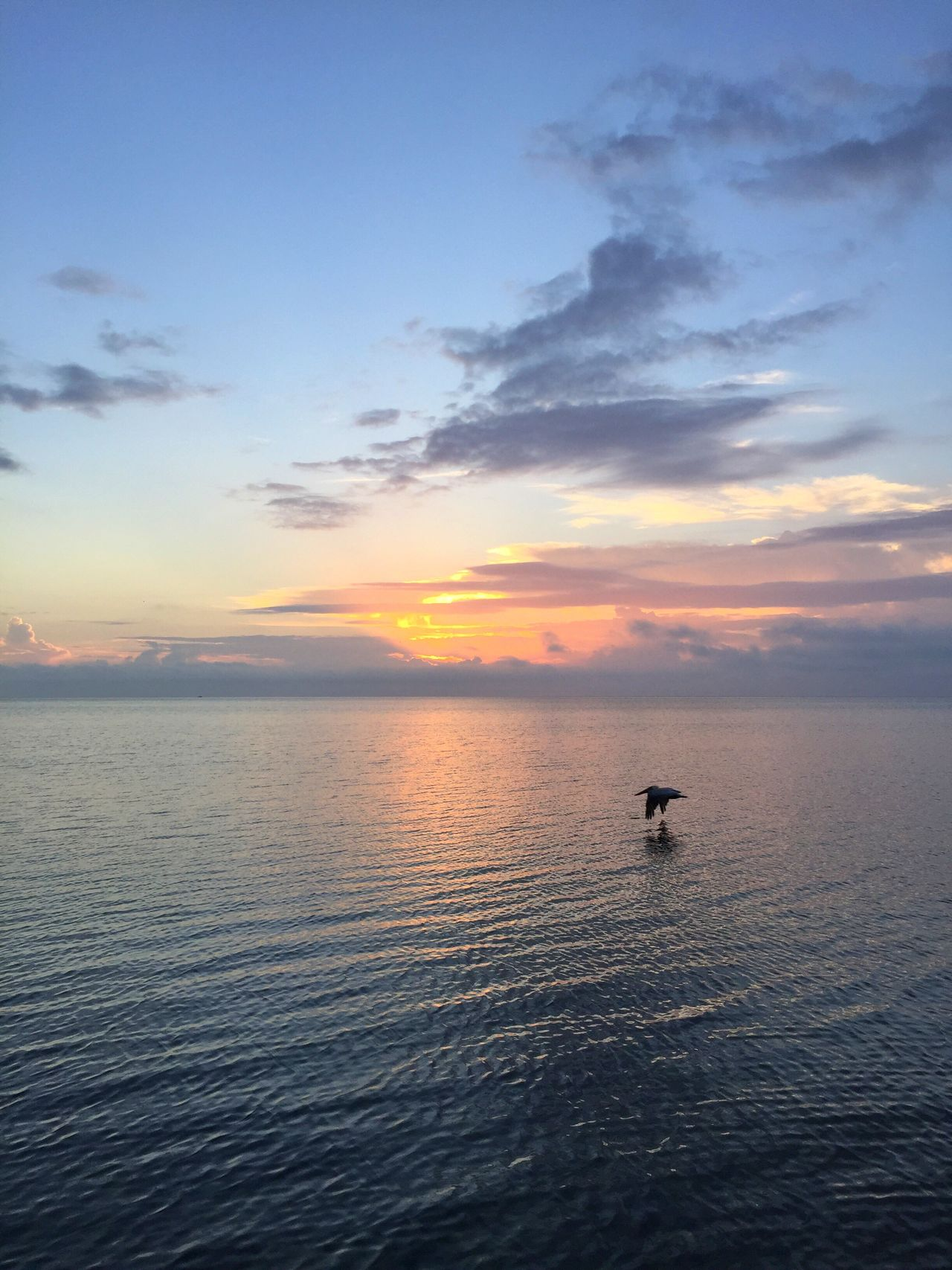 Florida Keys Islamorada Sunrise Pelican In Flight Sea Pastel Power Tranquil Scene Beauty In Nature Water Nature Sky Scenics Waterfront Silhouette Outdoors Cloud - Sky Tranquility Horizon Over Water