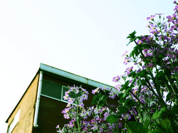 花 Flowers Sky
