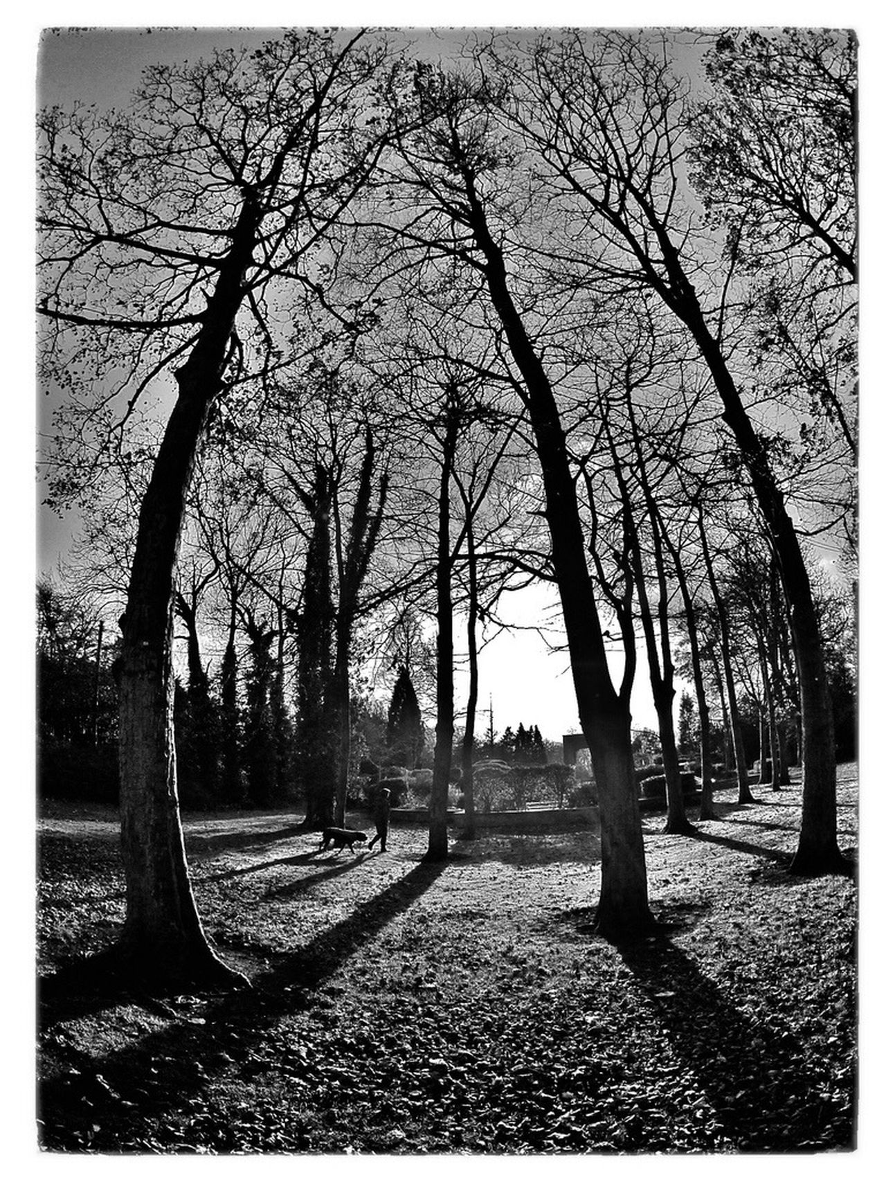 Trees Longford Park Black And White Photography Black And White Black & White Blackandwhite Photography At The Park Park Amateur Photography