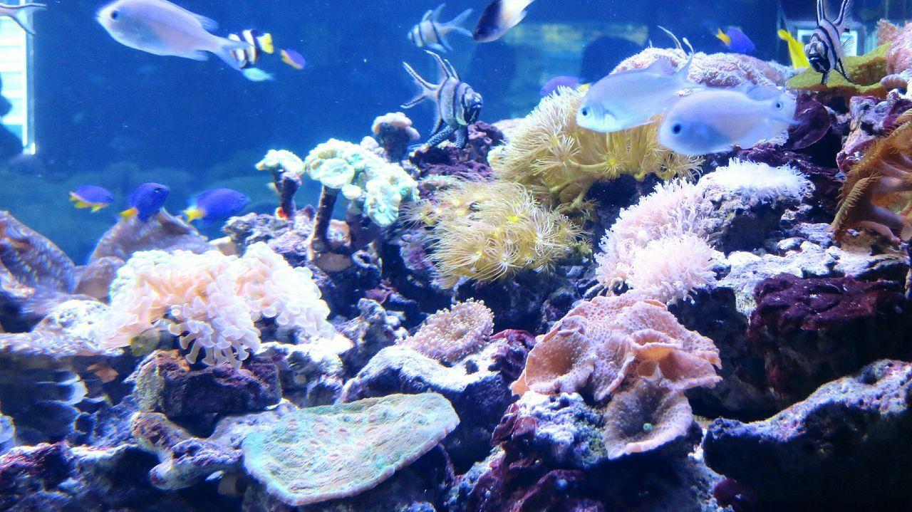 рыбы рыбки аквариум подводный мир подводная жизнь Дикая природа Природа фото природы морская жизнь Fish Aquarium Aquarium Life Aquarium Fish Underwater Underwater Photography Sealife Sea Life Nature Nature Photography