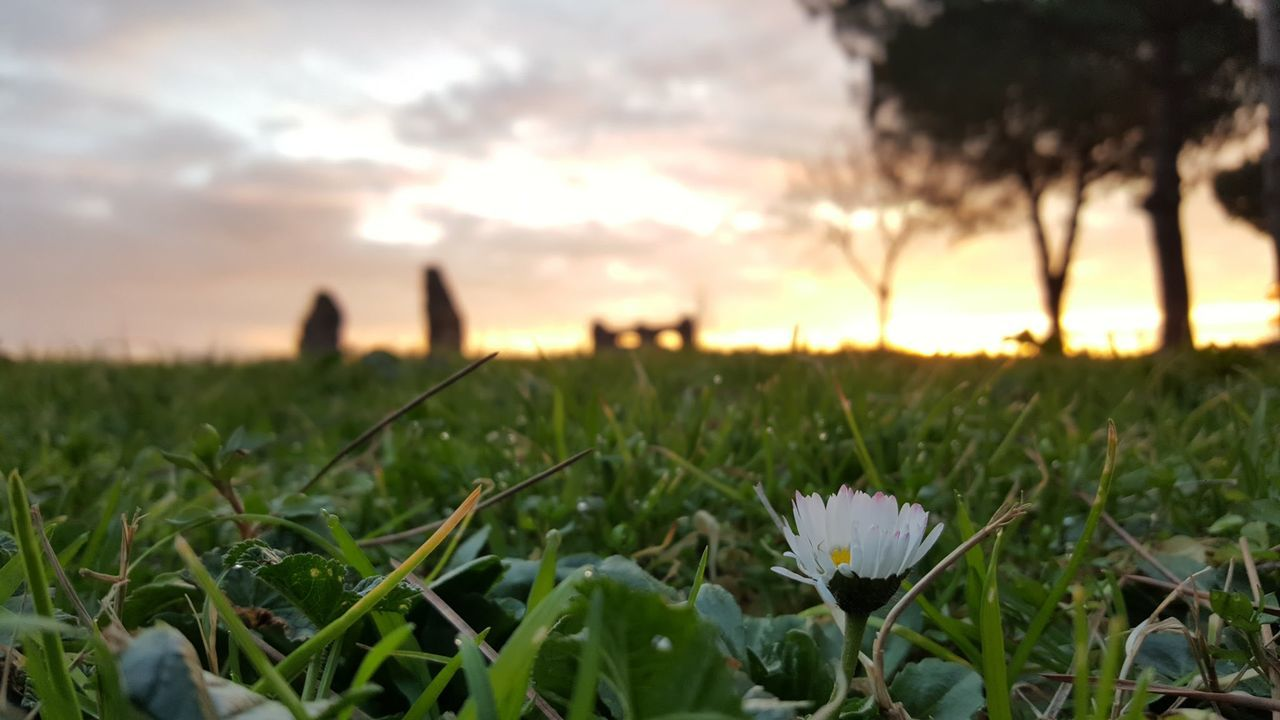 Alba invernale Growth Nature Plant Sunset Beauty In Nature Outdoors Grass Summer Rural Scene Field Flower Landscape Close-up No People Scenics Flower Head Day Sky Freshness First Eyeem Photo
