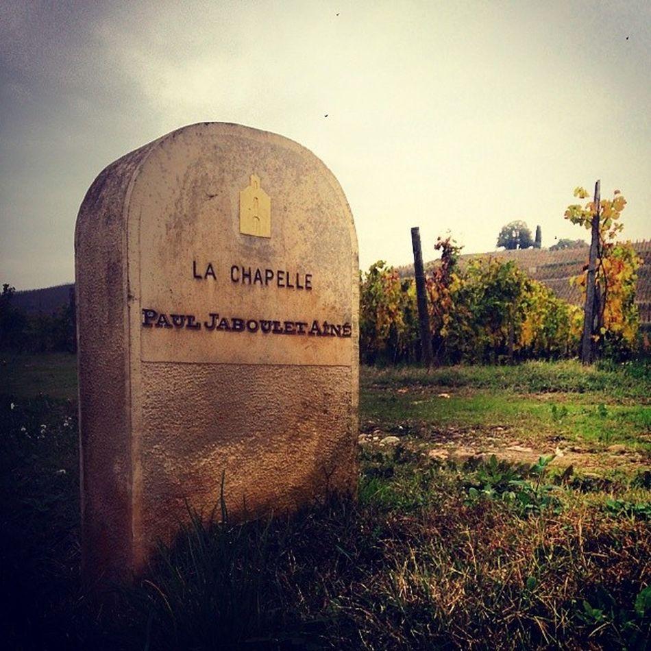 Coteaux de l'Hermitage, dans la vallée du Rhône. Vignes Vin Stravambassador Wines chapoutier