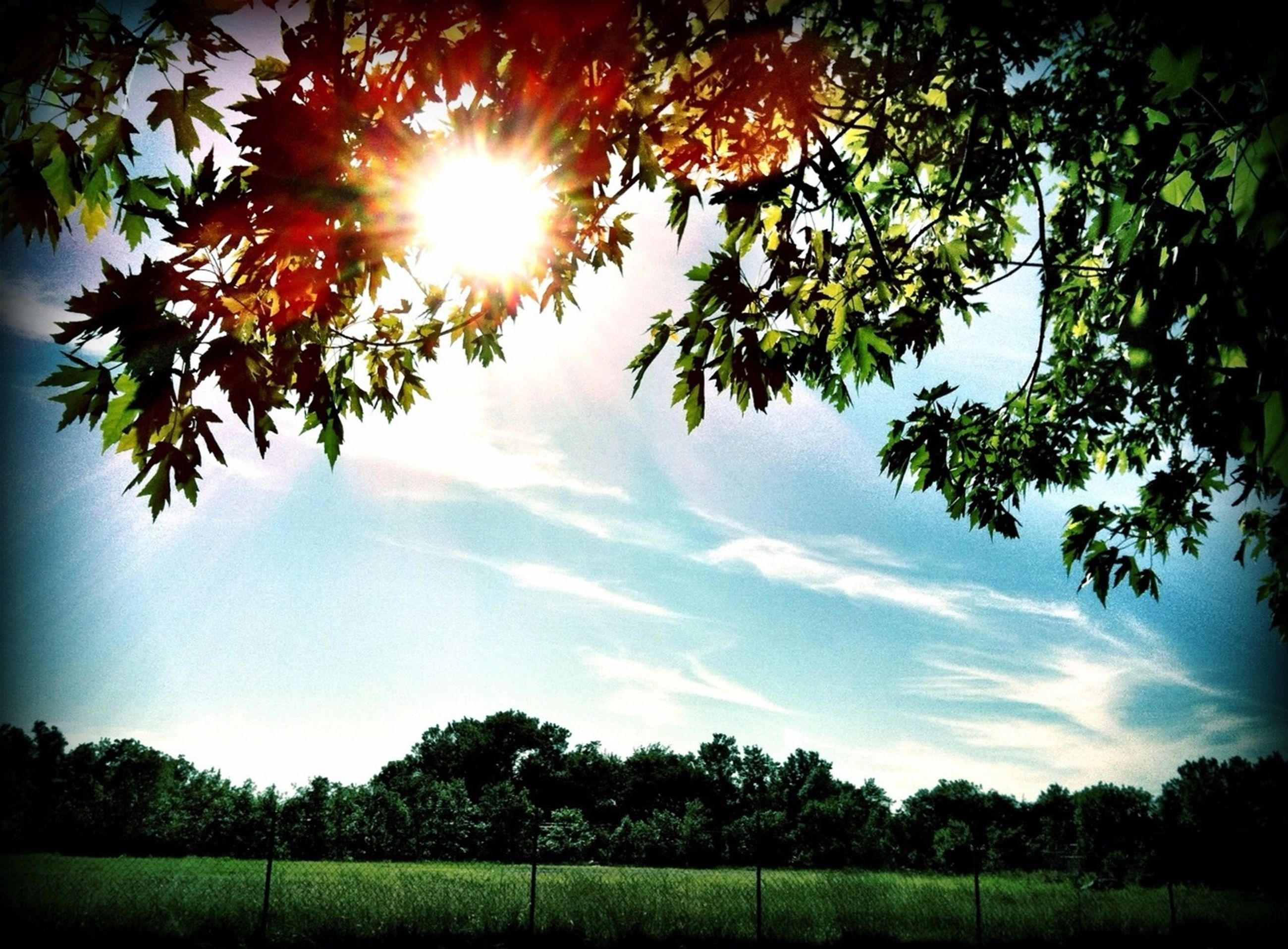 tree, sun, growth, tranquility, sunlight, beauty in nature, tranquil scene, sunbeam, nature, sky, green color, scenics, branch, lens flare, field, idyllic, landscape, sunny, cloud - sky, no people